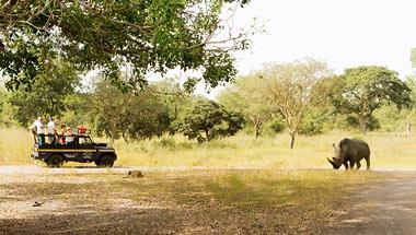 Rundrejser i Gambia og Senegal