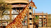 Disney's Animal Kingdom Lodge - familiehotel med gode børnerabatter.